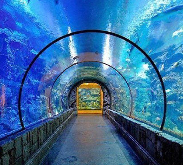 The Beautiful Aquarium Large Acrylic Tunnel