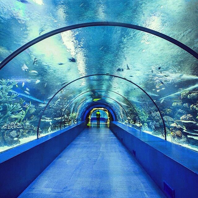 Fantastic Large Acrylic Aquarium Tank Tunnel