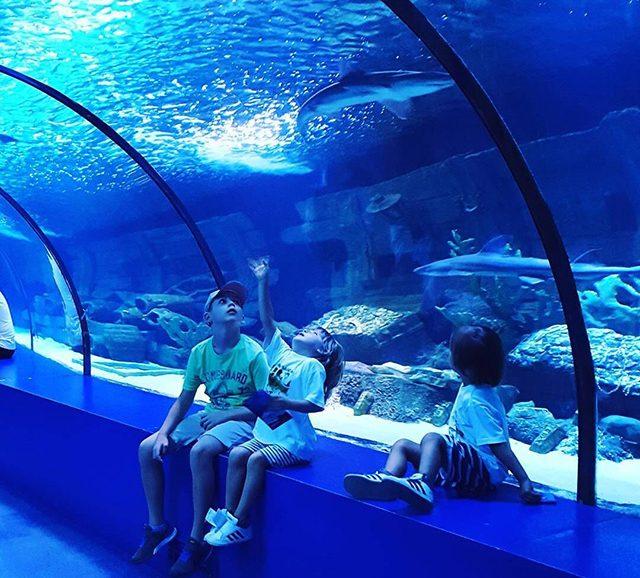 The Large Custom Acrylic Aquarium Tunnel