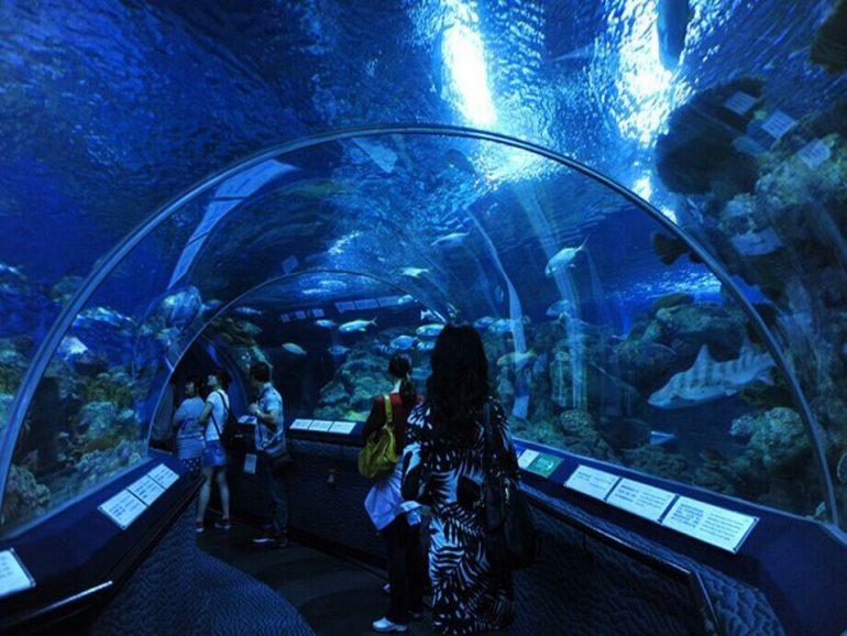 Oceanarium Serpentine Acrylic Tunnel Aquarium